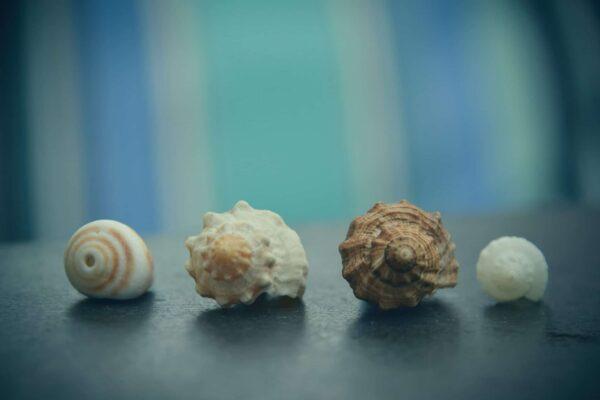 Crooning Seashells scaled